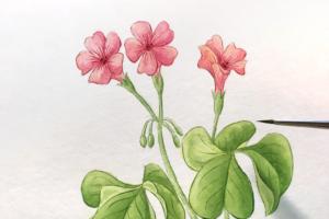 簡単な花の描き方(水彩画メイキング)